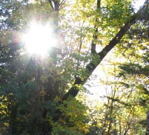 wicca-spirituality Sun Through Leaves