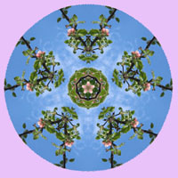 apple-blossom-sky-mandala-4