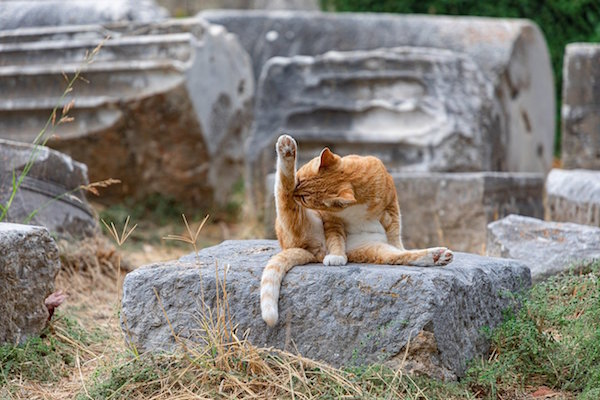 Cat Bathing in Temple Ruins © Wicca-Spirituality.com