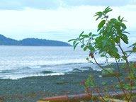 arbutus-beach