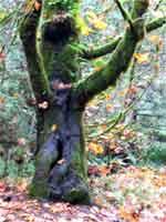 wicca-spirituality mabon tree