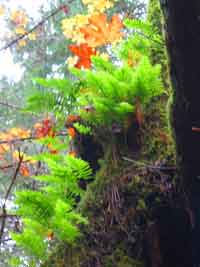 wicca-spirituality autumn-equinox moss and leaves