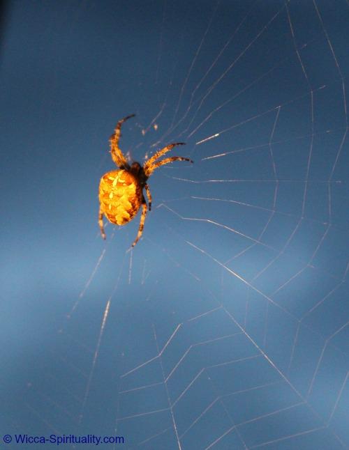 Spider Weaving Spiderweb  © Wicca-Spirituality.com